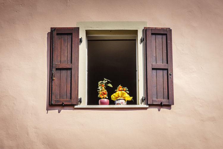 Window StillLifePhotography Tranquility Bottom View Flowers Open Open Window Still Life Tranquil Scene Window Window Shutters