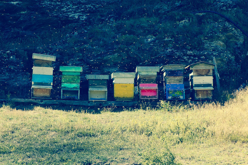 Agriculture APIculture Bee Beehive Box - Container Colony Day Field Grass Honeycomb Multi Colored Nature No People Outdoors