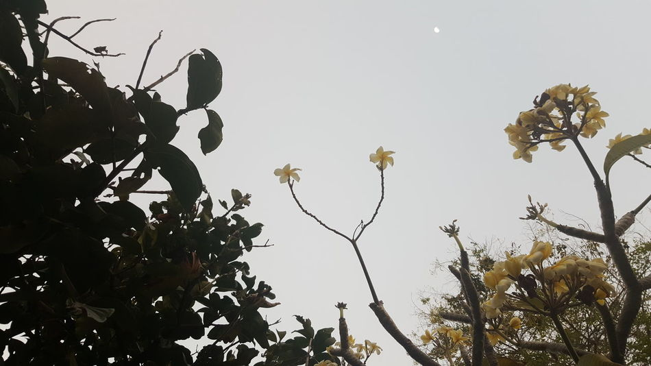 Tree Branch Nature No People Sky Low Angle View Outdoors Beauty In Nature Day Nature Leaf Plant Beauty In Nature Life Ecology Ecology Forest Background Two Two Is Better Than One Two Of A Kind Two Flowers Two Is Better Than One~ Flower Flora Moon The Great Outdoors - 2017 EyeEm Awards