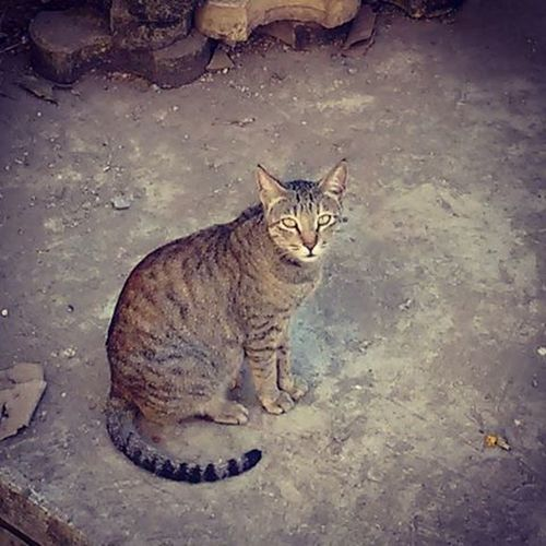 Don't Stare at me like that,....you Street Cat ..😺😼😸😹😻😽😿😾🙀🐈🐱 .. .. .. . Streetcat Catstagram Cats Catsofinstagram Cats_of_instagram Catsofig Catstare Catlover Catoftheday India Mumbai Photooftheday Picoftheday Phtographer Catphotography Instalike Traveler 😚
