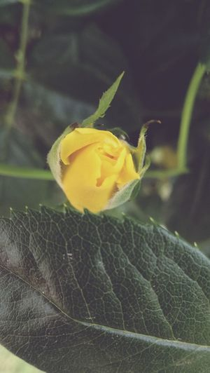 Leaf Flower Fragility Plant Nature Beauty In Nature Close-up Freshness Petal Green Color Growth No People Outdoors Day Yellow Flower Head Water