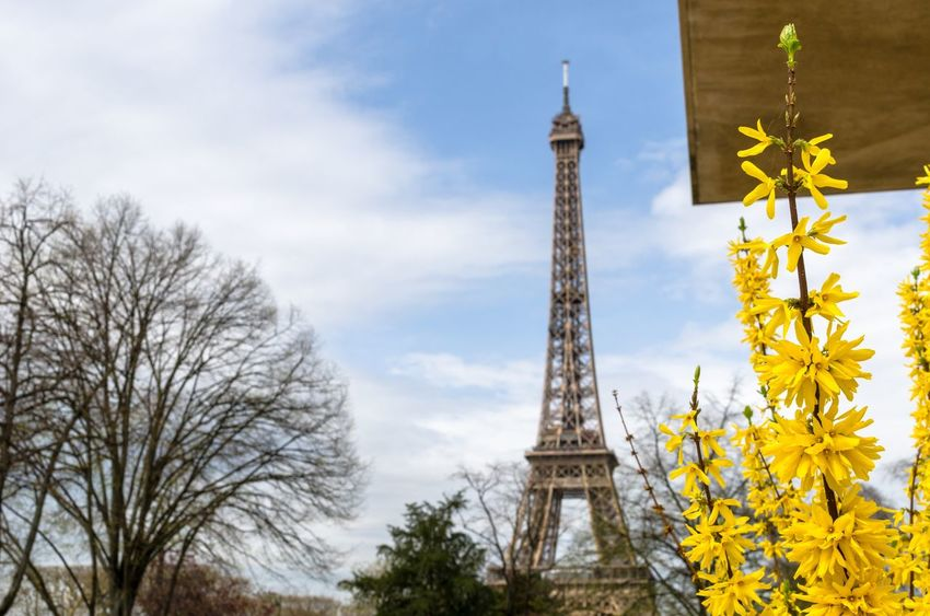 """""""The promise of good things to come."""" Forsythia blooming in spring with the Eiffel Tower in the background. Flowers Season  Fresh Forsythia Flowers Copy Space Eiffel Tower In Spring Eiffel Tower Champs De Mars Park Forsythie Forsythia Forsythia Intermedia Flower Blossoming  Yellow Flowers Yellow Flower In Bloom Blooming Clouds Vibrant Colors Tree Sky Built Structure Architecture Tower Plant Tourism Bare Tree Travel Day"""