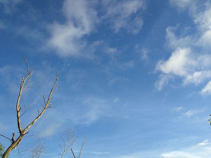Sky Nature's