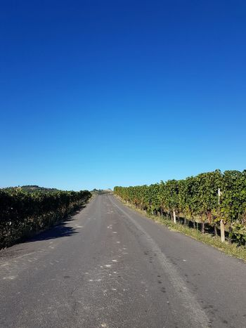 The Way Forward Road Outdoors Clear Sky Day No People Sky Nature Langhe Piedmont Italy Travel Destinations Summer Vineyard Cultivation Vineyards  Vine - Plant Winery Growth Winemaking Rural Scene On The Road