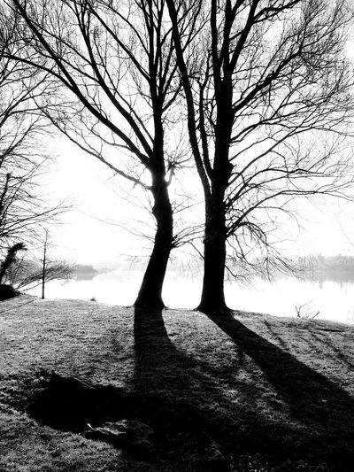 Blackandwhite Light And Shadow Trees