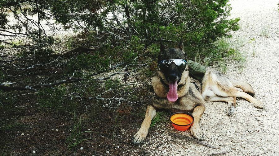 My Dogs Are Cooler Than Your Kids Dog I Love My Dog Mwd On A Hike