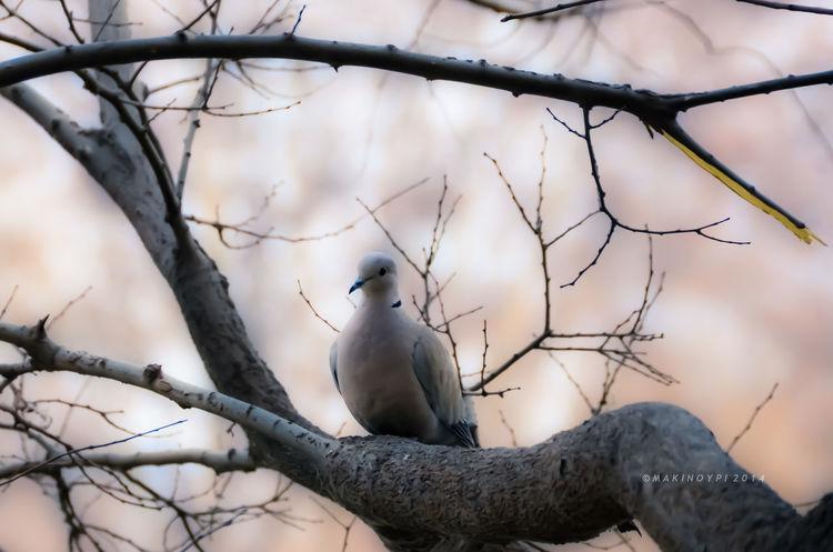 Birds EyeEmbestshots Streamzoofamily TheVille