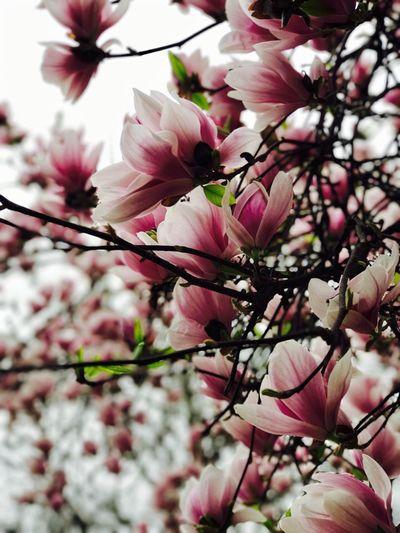 Flower🌺 Flower