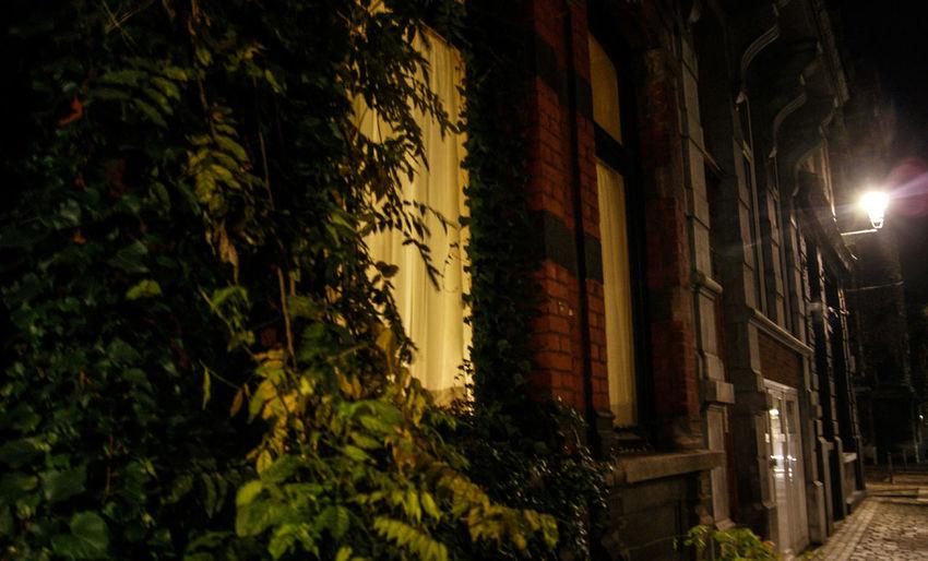 #freestyle ***senseison Sensaciones Illuminated City Tree Architecture Sky