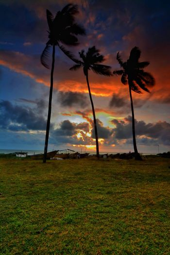 coconut trees Pantai Dungun Terengganu Malaysia Three Red Clouds Red Sky Blue Sky Dawn Beach Hawaii Bali Bahamas Maldives Tree Palm Tree Sunset Tree Trunk Silhouette Dramatic Sky Sky Grass Landscape Cloud - Sky Coconut Palm Tree Coconut Sun Sunrise Palm Leaf Tropical Tree Coast