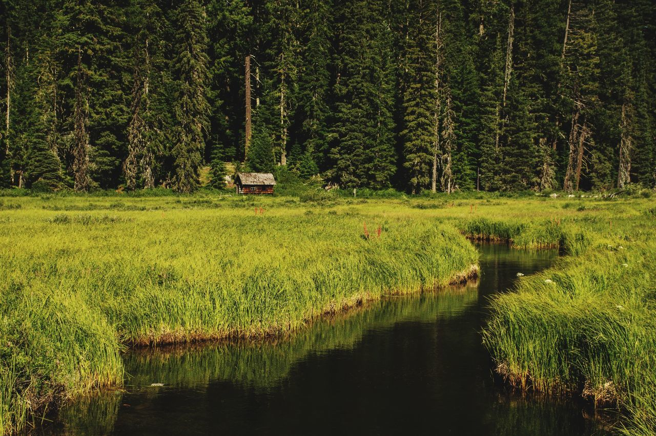 water, tree, nature, outdoors, tranquility, reflection, no people, tranquil scene, scenics, growth, day, forest, green color, lake, beauty in nature, grass