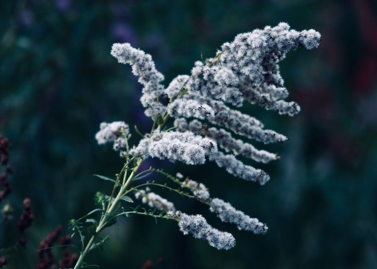 Winter Plant Plant Beauty In Nature Nature Growth Close-up Focus On Foreground Flower Fragility Cold Temperature Freshness Vulnerability  Winter Outdoors Frozen White Color Ice Flowering Plant Bokeh My Best Photo
