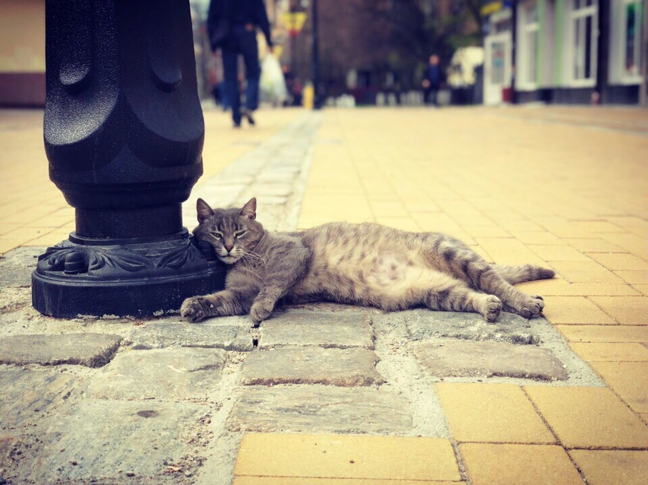 cat, domestic, feline, pets, domestic cat, mammal, domestic animals, one animal, footpath, vertebrate, relaxation, street, day, city, lying down, sidewalk, people, focus on foreground, outdoors, whisker, tabby