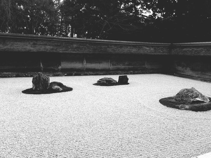Outdoors Day Sunlight Stone Garden Zen Kyoto Mammal Tree No People