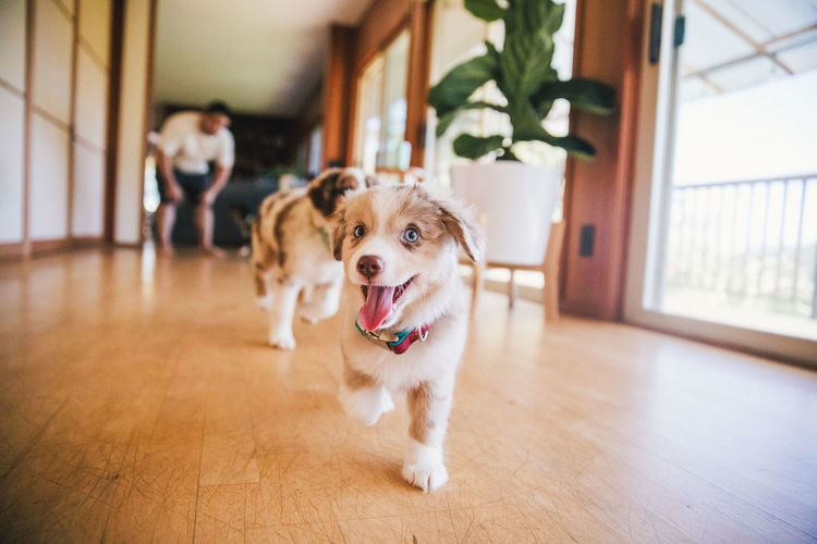 Dog on hardwood floor at home