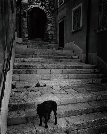 Dog standing on stairs