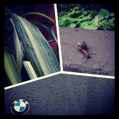 A few of my favorite rainy-day things :) Snailfriend Freecarwash Raindrops Reflections fresh rainyday