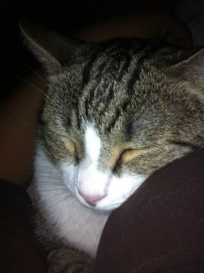 My Cat Sleeping On Me