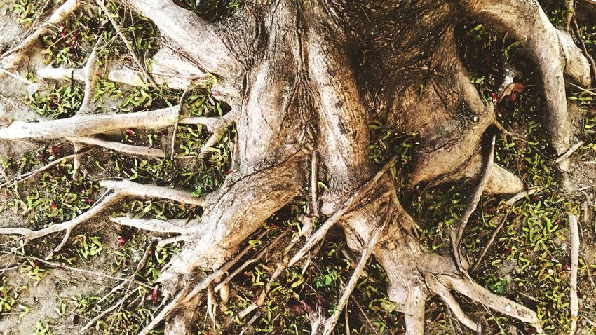 Roots Plant Growth Tree No People Nature Day Full Frame Backgrounds Outdoors Land Beauty In Nature Trunk Branch Tree Trunk Pattern Close-up Sunlight
