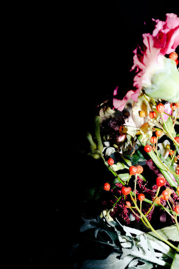 Beauty In Nature Black Background Bouquet Close-up Colors Copy Space Day Flower Flower Head Fragility Freshness Nature No People Plant