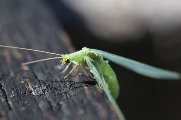 Macro shot of green insect on wood