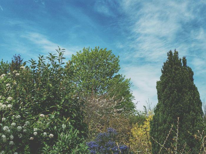 Spring Colours Spring Colors Mature Garden Blue Sky Background