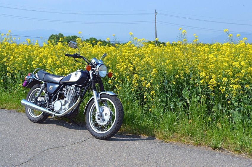 Japan Flowers Flower And Motorcycle Sr500 Sr400 Photography Photo Vintage Bike Bike Drive