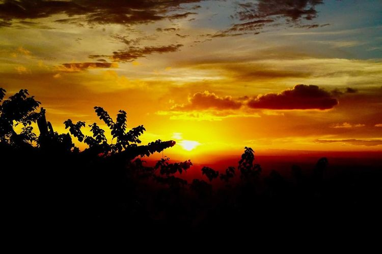 Sunset Silhouette Dramatic Sky Tree Landscape Nature Sunlight Scenics Cloud - Sky Sky Sun Outdoors Multi Colored Beauty In Nature Travel Destinations Palm Tree No People Plant Beauty Vacations