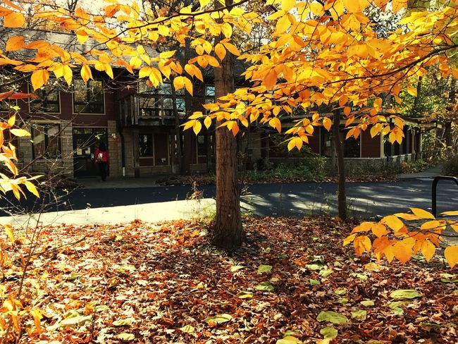 Autumn Beauty In Nature Leaf No People Tree Nature Freshness Yellow Leaves