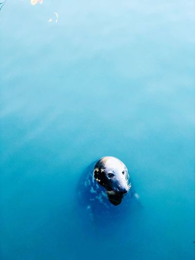 Seehund Water Sea Swimming Nature Sport Day Blue Marine Holiday Aquatic Sport Turquoise Colored Outdoors Vacations Underwater High Angle View UnderSea Swimming Pool One Person Copy Space Trip My Best Photo