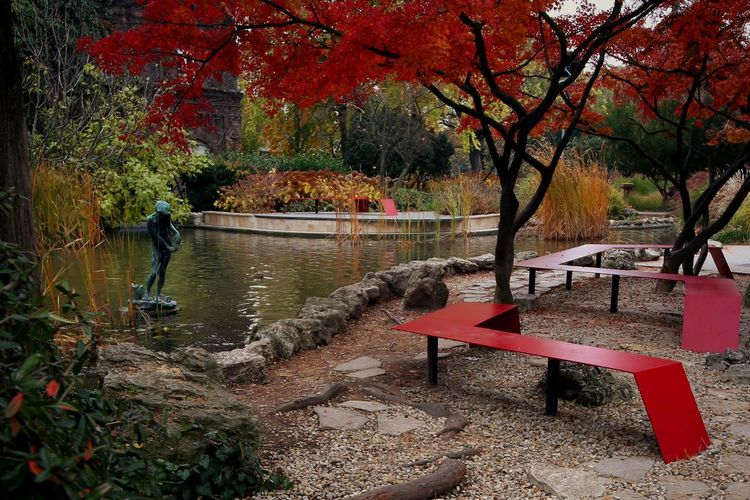 Water Tree Nature Outdoors Autumn Lake Margaret Island Plant No People