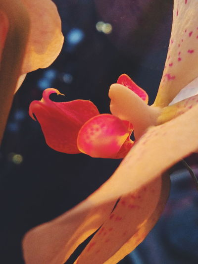 Nature Flower Beauty In Nature Red Growth Day Car Cars Street Light Lightshow