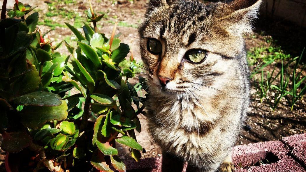 Cat Cats Leopar Greeneye Lion Tiger Summer