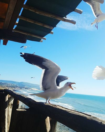 Sky Sea Outdoors Coastal Feature Summer Day Beach Water Vacations Nature Across The Border Puerto Nuevo Daytrip High Angle View Coastline Mexico Coast Mexico Sea Life Seagulls In Flight Bird Travel Vacations Seagull Vacation Live For The Story Focus On The Story