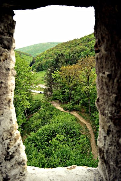 Beauty In Nature Castle Close-up Day EyeEm EyeEm Gallery Green Color Growth Landscape Nature Nature Nature Photography Nature_collection No People Outdoors Scenics Sky Tree Window Transylvania💕 Transylvania