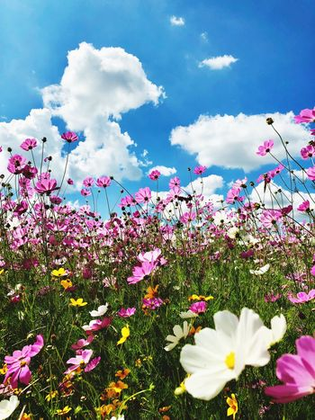 Flowers Flower Flowering Plant Plant Freshness Beauty In Nature Cloud - Sky Sky Nature Vulnerability  No People Outdoors Pink Color Close-up Petal Day