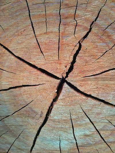 Concentric Tree Ring Backgrounds Full Frame Textured  Cracked Tree Arid Climate Close-up Tree Stump Deforestation Global Warming Dead Plant Environmental Damage Dried Dead Tree Bark Tree Trunk Plant Bark