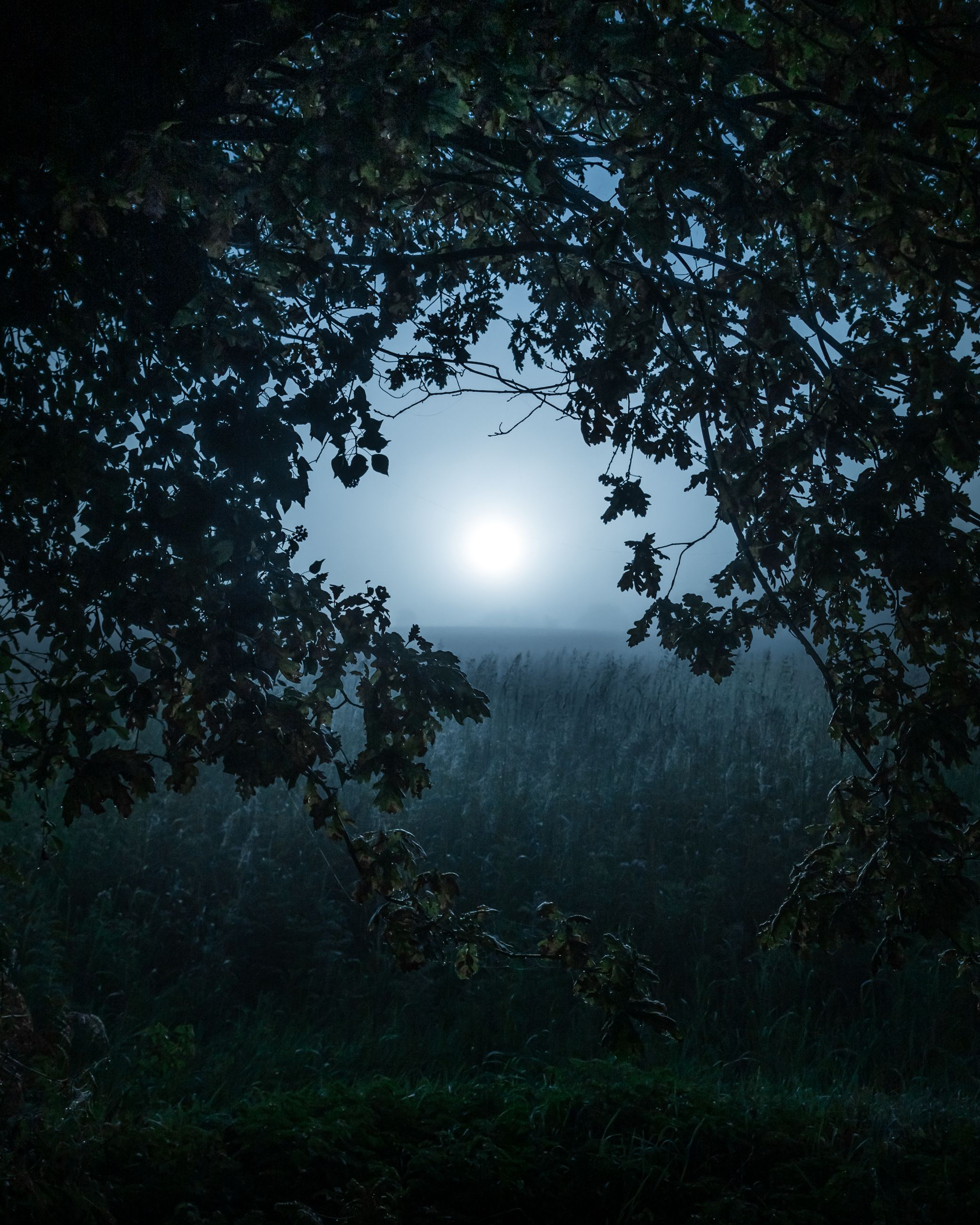 tree, plant, darkness, moonlight, night, light, moon, nature, full moon, sky, tranquility, beauty in nature, land, no people, scenics - nature, forest, astronomical object, tranquil scene, outdoors, reflection, environment, growth, dark, silhouette, astronomy, landscape, space, morning, branch, star