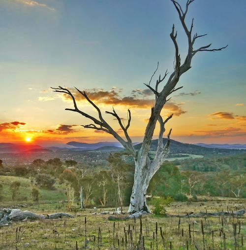 Sunset Landscape Tree Sun No People Outdoors Australian Bush This Is Where I Live Australia Colours Of Nature The Great Outdoors - 2017 EyeEm Awards Breathing Space EyeEmNewHere Investing In Quality Of Life The Week On EyeEm Perspectives On Nature Postcode Postcards