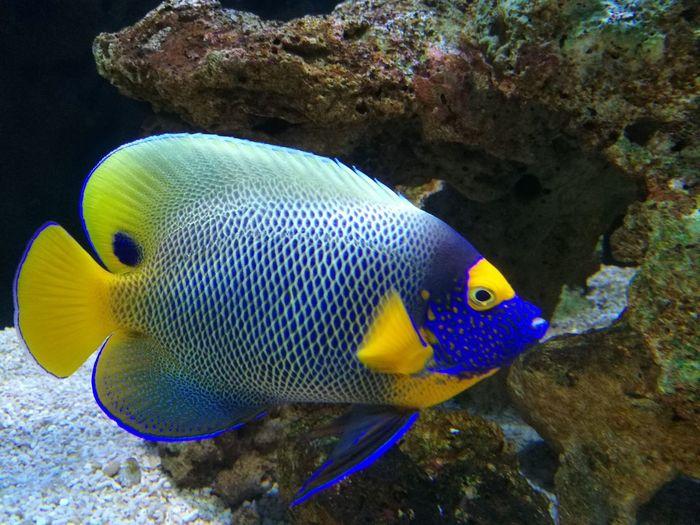 Sea Fish Aquarium Water Close-up Fish Beautiful Colors!