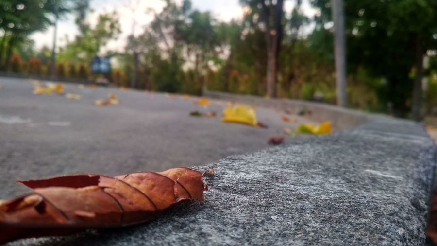 Focus in the garden Autumn Change City Close-up Day Dry Focus On Foreground Food Leaf Leaves Nature No People Orange Color Outdoors Plant Plant Part Road Selective Focus Street Surface Level Transportation Tree