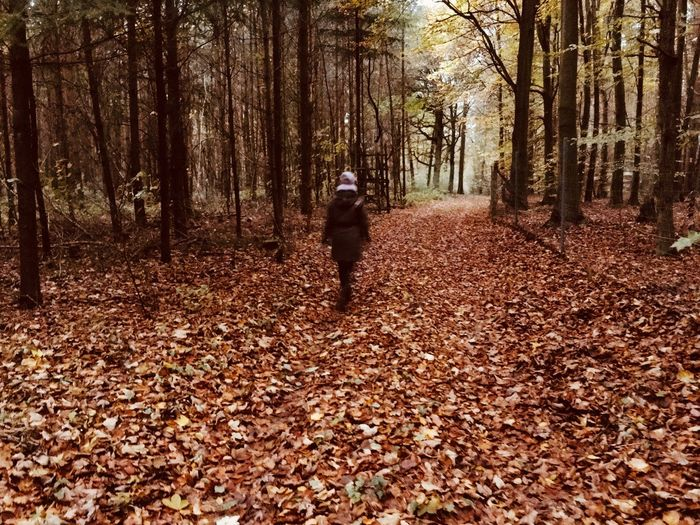 Rear View Of Person Walking At Forest During Autumn