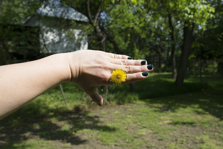 Cropped Image Of Woman With Yellow Flower On Finger