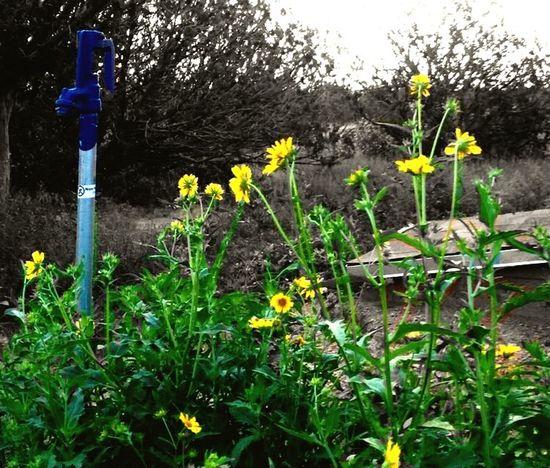"""""""Fountain of Life"""" Flowers Rural Scenes Rural Rural America Waterpump"""