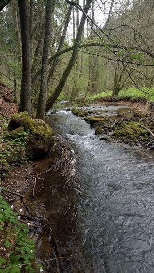 BACH Wald Fluss Steine Nature Forest Outdoors Wasser Oberes Püttlachtal Püttlach Fränkische Schweiz