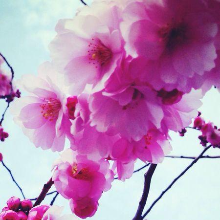 Spring Flowers EyeEm Nature Lover Nature