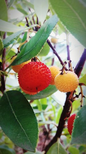 Fruit Food And