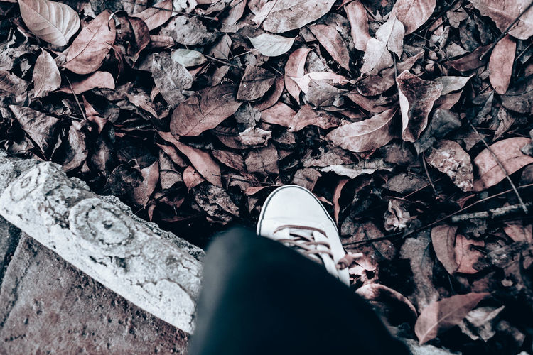 pause for a moment Taking A Break Wandering Life Contemplation Foot Destination Meditation Soul Searching Autumn Copy Space Park Redish Brown Diagonal Travel Beauty In Nature Canvas Object Isolated Backgrounds Fallen Dry Leaves Human Limb Human Foot Outdoors Leaves Leisure Activity Nature Change Day Lifestyles Unrecognizable Person Standing High Angle View Dry Leaf Plant Part Real People One Person Body Part Human Body Part Shoe Personal Perspective Human Leg Low Section Juxtaposition Cement Ground International Women's Day 2019 The Art Of Street Photography