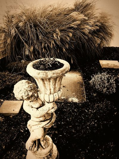Showcase: November Mybeauty Garden Photography MyFavoritePicture Love♡ Fallbeauty Naturalbeauty