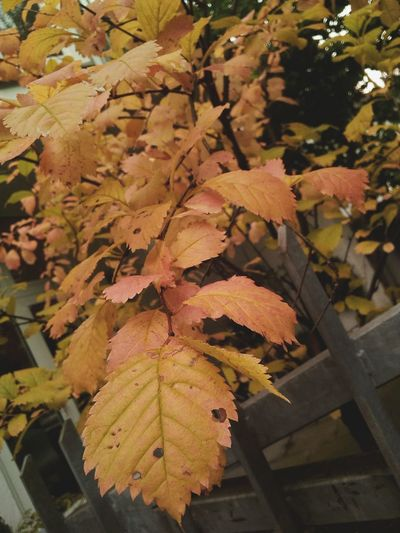 Autumn Nature Beauty In Nature Leaf Close-up Outdoors Happiness Ich liebe den Herbst...🍁
